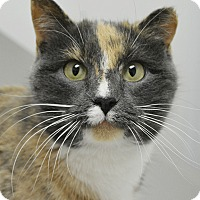 Adopt A Pet :: Gianna - Springfield, IL