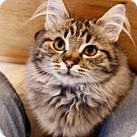 Adopt A Pet :: Persia - Polson, MT