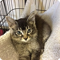 Adopt A Pet :: Wolfie - Hallandale, FL