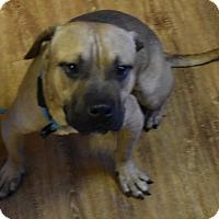 Adopt A Pet :: Cheerios - Seattle, WA