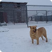 Adopt A Pet :: Ginger - Walthill, NE