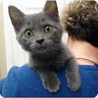 Adopt A Pet :: Lil - Chicago, IL