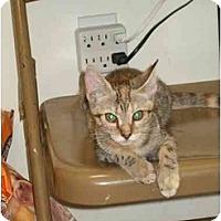 Adopt A Pet :: Tia - Fort Lauderdale, FL