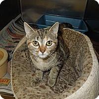 Adopt A Pet :: Felicity - Medina, OH