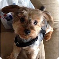 Adopt A Pet :: Tootsie - Jacksonville, FL