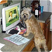 Adopt A Pet :: Benjamin - ADOPTION PENDING - Sun Prairie, WI