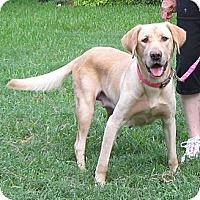 Adopt A Pet :: Lucie - Spring, TX