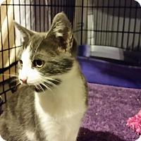 Adopt A Pet :: Roger - Milwaukee, WI