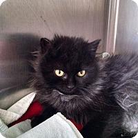 Adopt A Pet :: Sasha - Armuchee, GA