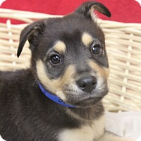 Adopt A Pet :: York - Waldorf, MD