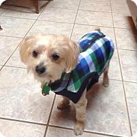 Adopt A Pet :: Leo - Beavercreek, OH