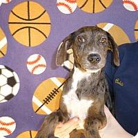 Adopt A Pet :: Sage - Oviedo, FL
