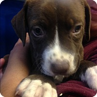 Adopt A Pet :: DANA LITTER - Pompton Lakes, NJ