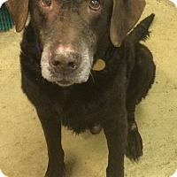 Adopt A Pet :: Roy - Oak Ridge, NJ