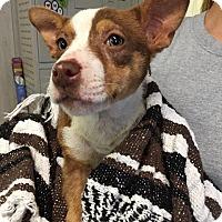 Adopt A Pet :: Minnie Mouse - Waycross, GA