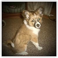 Adopt A Pet :: MOLLY - Medford, WI
