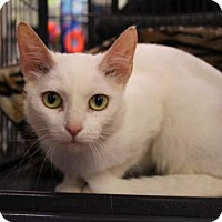 Adopt A Pet :: Aria - Hamilton, ON