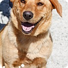 Adopt A Pet :: Valentine