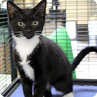 Adopt A Pet :: Verdi - Sarasota, FL