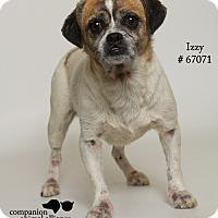 Adopt A Pet :: Izzy - Baton Rouge, LA