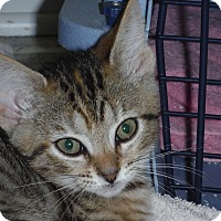 Adopt A Pet :: Amelia - Richmond, VA