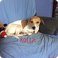 Adopt A Pet :: NILLA - Ventnor City, NJ