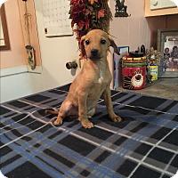 Adopt A Pet :: Gabby - Kittery, ME