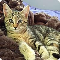 Adopt A Pet :: Maxine - Duncan, BC