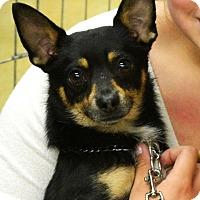 Adopt A Pet :: Kidogo - Ogden, UT