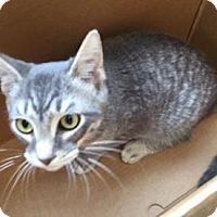 Adopt A Pet :: GOOFY - San Antonio, TX