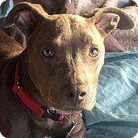Adopt A Pet :: Joni - San Diego, CA