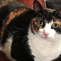 Adopt A Pet :: Lilly - Durham, NC