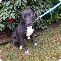 Adopt A Pet :: BAILEY - McKinleyville, CA