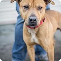 Adopt A Pet :: Lucky - Fresno CA, CA