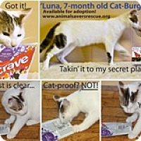 Adopt A Pet :: Luna - Atlanta, GA
