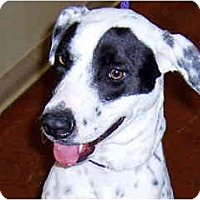 Adopt A Pet :: Willow -= Courtesy Post - Scottsdale, AZ