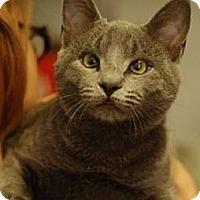 Adopt A Pet :: Nimbus - St. Louis, MO