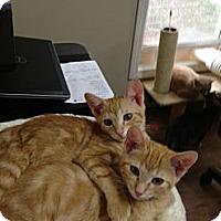 Adopt A Pet :: Eli & Ernie - Monroe, GA