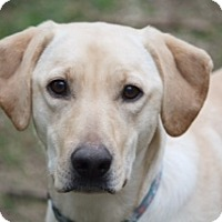 Adopt A Pet :: Cara - Austin, TX