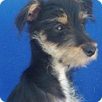 Adopt A Pet :: Ebony-WATCH MY VIDEO!!! - Irvine, CA