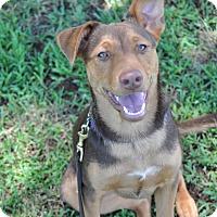 Adopt A Pet :: Roche - Peachtree City, GA