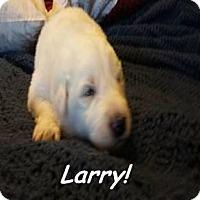 Adopt A Pet :: Larry - Kyle, TX