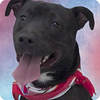 Adopt A Pet :: Arkum - Cincinnati, OH