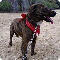 Adopt A Pet :: NANI - Chandler, AZ
