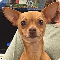 Adopt A Pet :: Lynn - Orlando, FL