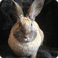 Adopt A Pet :: Rue - Watauga, TX