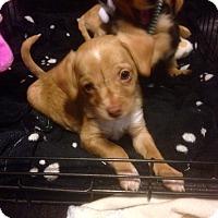 Adopt A Pet :: Winnie (ARSG) - Santa Ana, CA