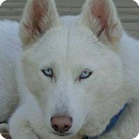 Adopt A Pet :: Skye - Raleigh, NC