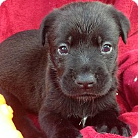 Adopt A Pet :: Rayden - Boston, MA