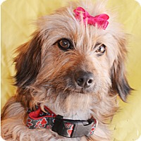 Terrier (Unknown Type, Medium) Mix Dog for adoption in Littlerock, California - Doodles